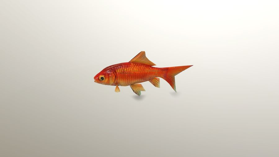 Gold Fish royalty-free 3d model - Preview no. 4