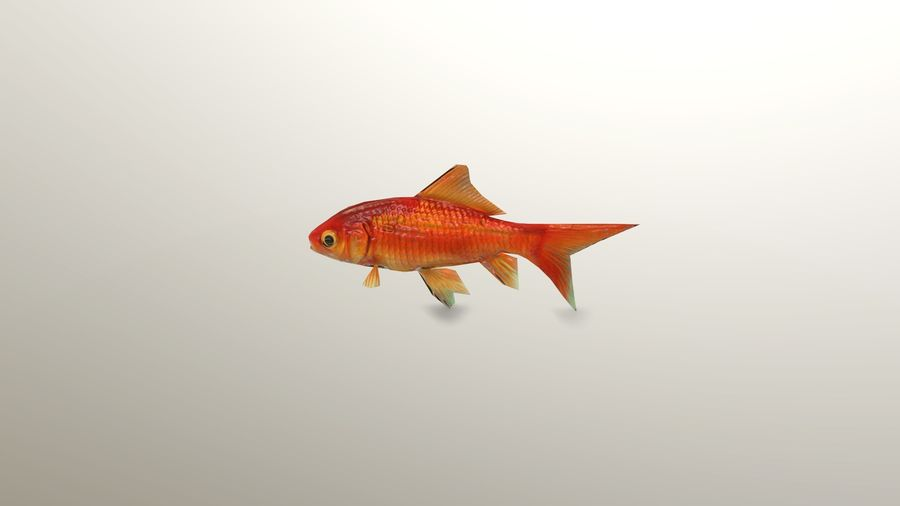 Gold Fish royalty-free 3d model - Preview no. 3