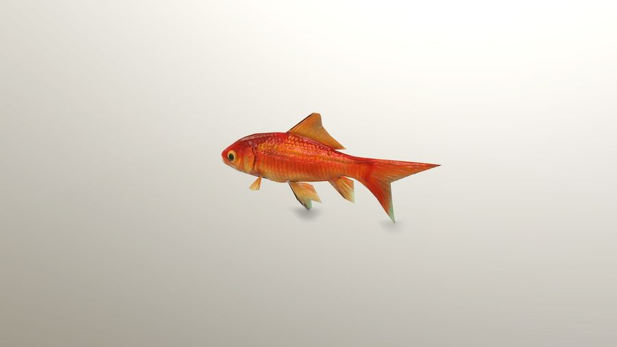 Gold Fish royalty-free 3d model - Preview no. 2