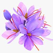 Crocus Blossom 3d model