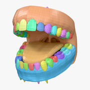 Tandvlees en tanden Basemesh 3d model