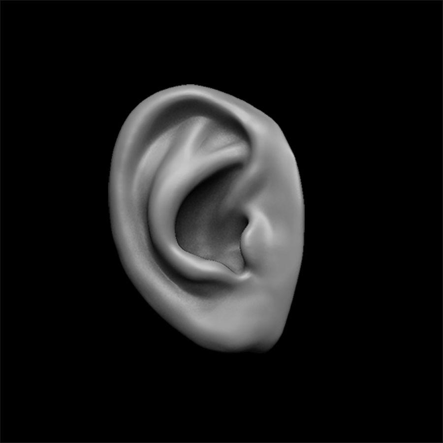 modèle 3D oreilles avec high poly et low poly royalty-free 3d model - Preview no. 21
