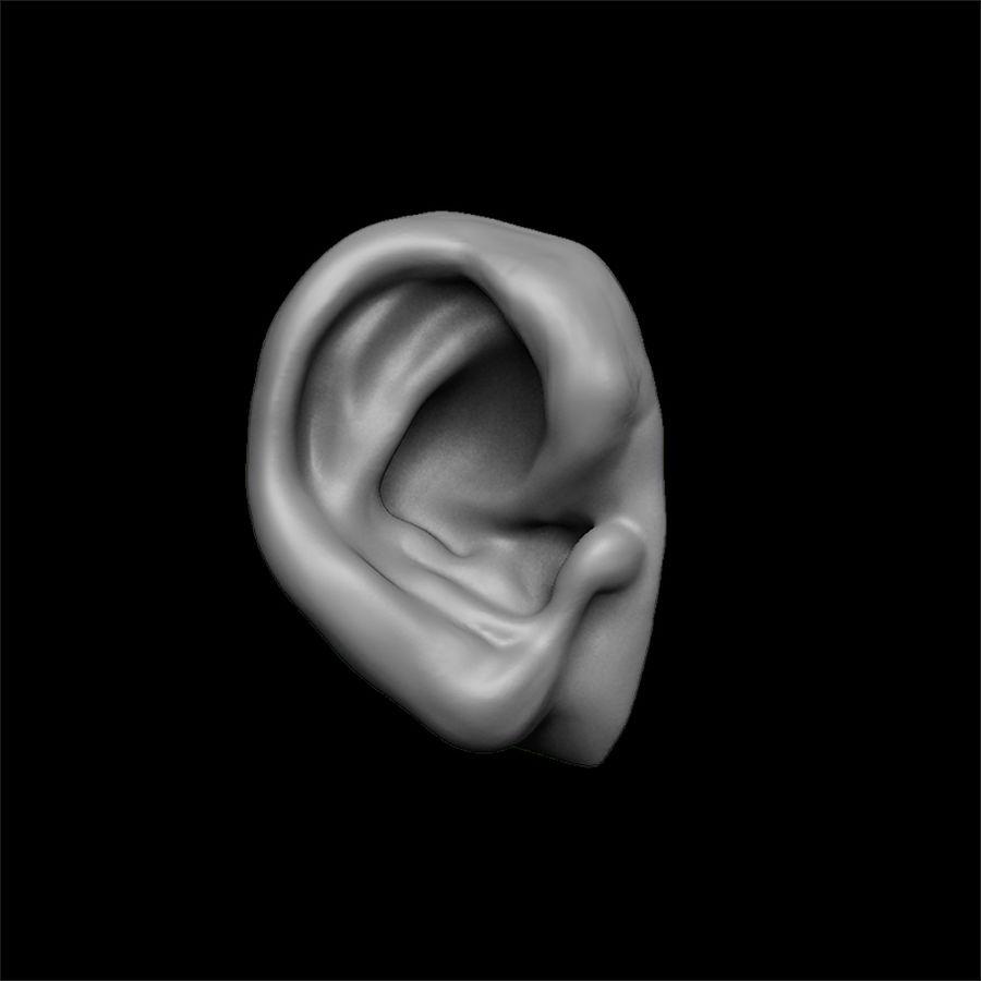 modèle 3D oreilles avec high poly et low poly royalty-free 3d model - Preview no. 12