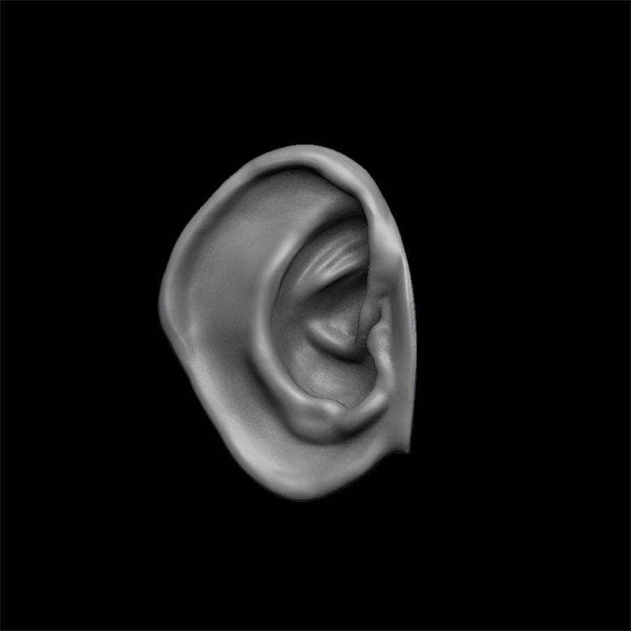 modèle 3D oreilles avec high poly et low poly royalty-free 3d model - Preview no. 2