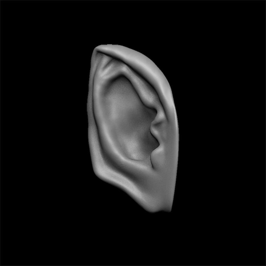 modèle 3D oreilles avec high poly et low poly royalty-free 3d model - Preview no. 8