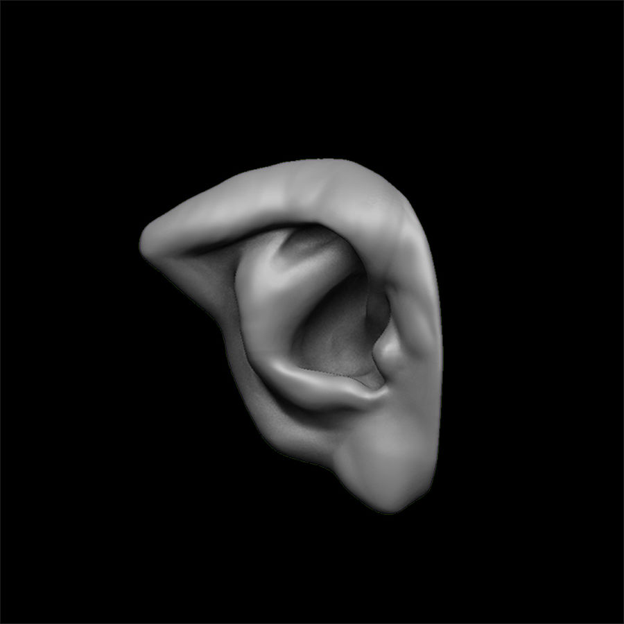 modèle 3D oreilles avec high poly et low poly royalty-free 3d model - Preview no. 19
