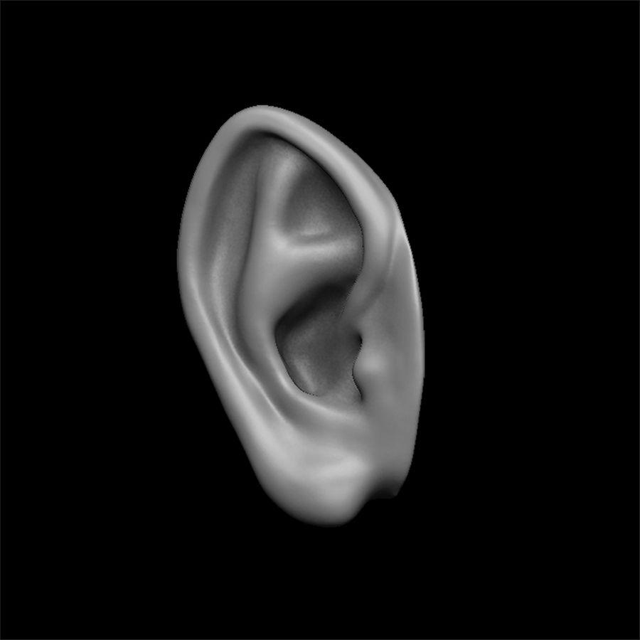modèle 3D oreilles avec high poly et low poly royalty-free 3d model - Preview no. 20