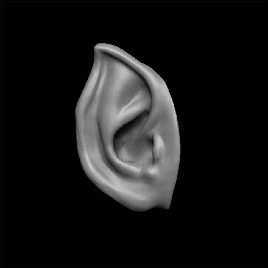 modèle 3D oreilles avec high poly et low poly royalty-free 3d model - Preview no. 7