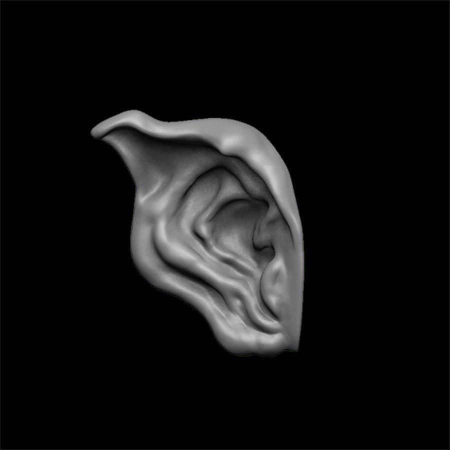 modèle 3D oreilles avec high poly et low poly royalty-free 3d model - Preview no. 10