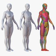 Character - Female Anatomy Body Base HighPoly 3d model