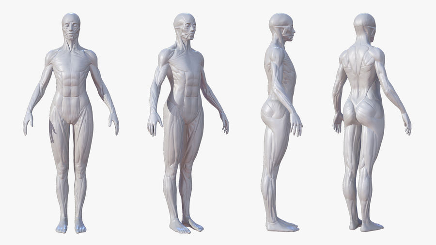 Character - Female Anatomy Body Base HighPoly royalty-free 3d model - Preview no. 3