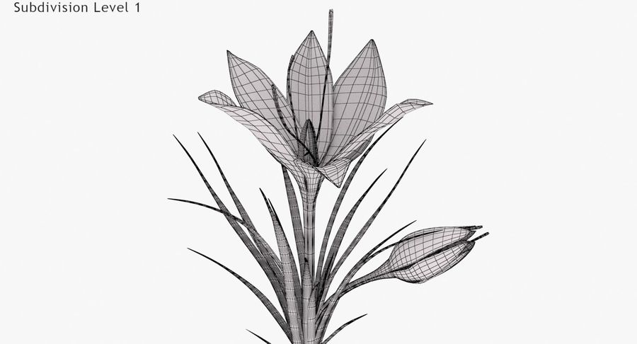 Plant Part Details royalty-free 3d model - Preview no. 15