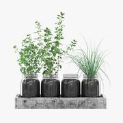 Kitchen Herbs 3d model