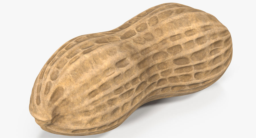 Peanut 1 royalty-free 3d model - Preview no. 3