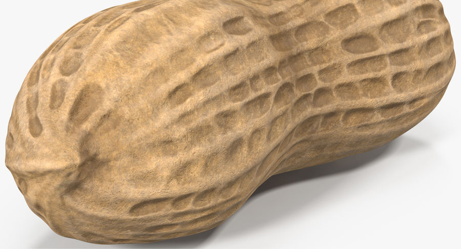 Peanut 1 royalty-free 3d model - Preview no. 7