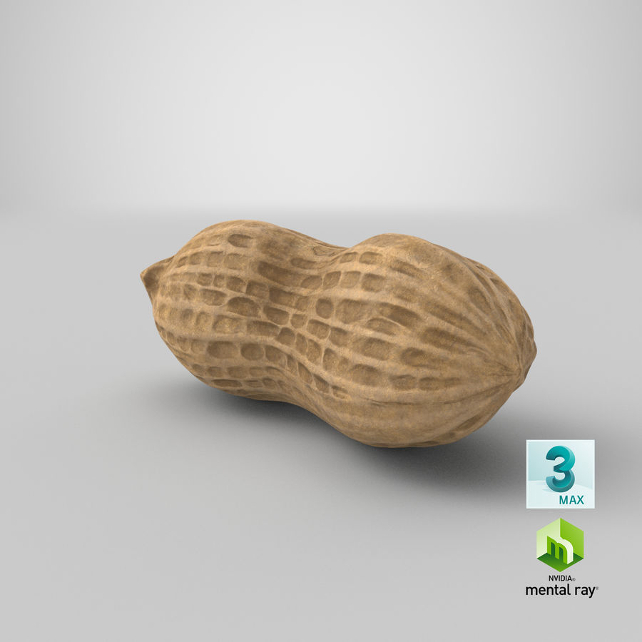 Peanut 1 royalty-free 3d model - Preview no. 39