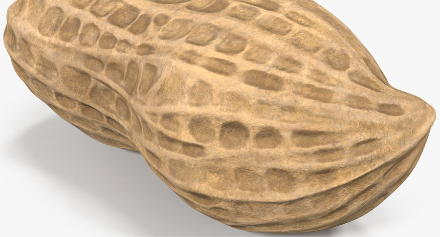 Peanut 1 royalty-free 3d model - Preview no. 8