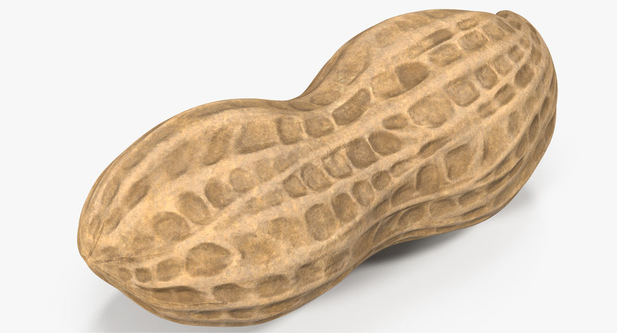 Peanut 1 royalty-free 3d model - Preview no. 5