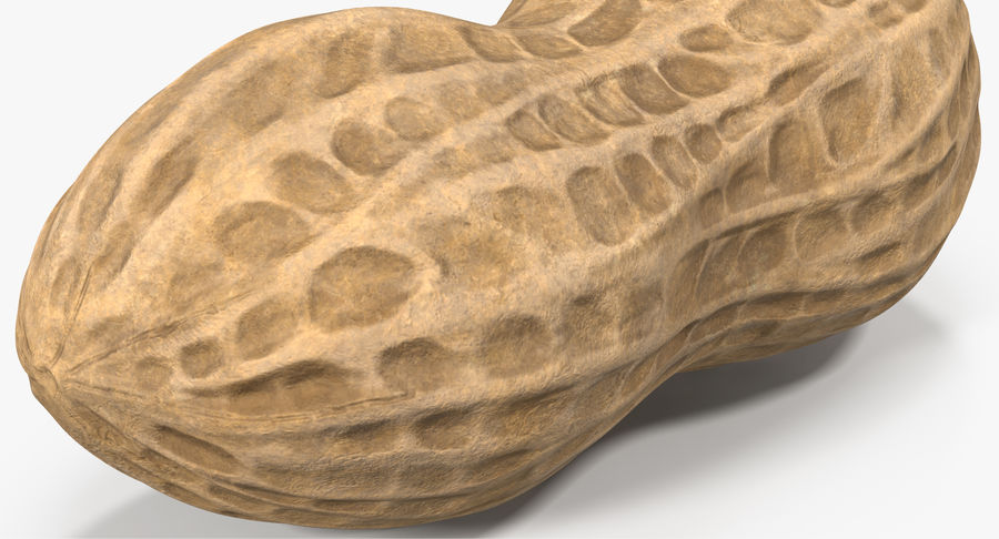 Peanut 1 royalty-free 3d model - Preview no. 9