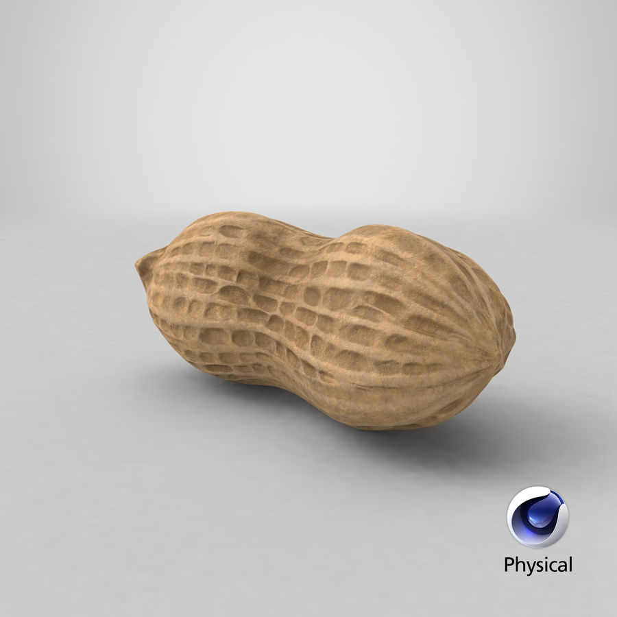 Peanut 1 royalty-free 3d model - Preview no. 40