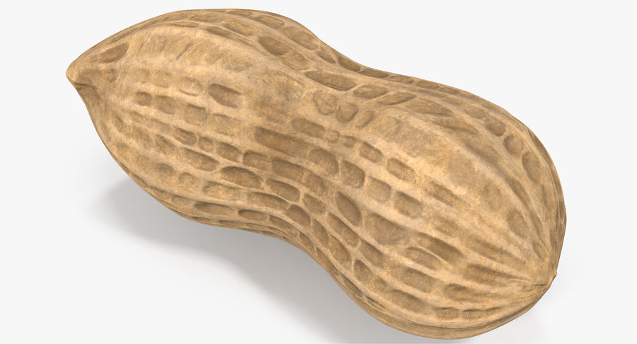 Peanut 1 royalty-free 3d model - Preview no. 6