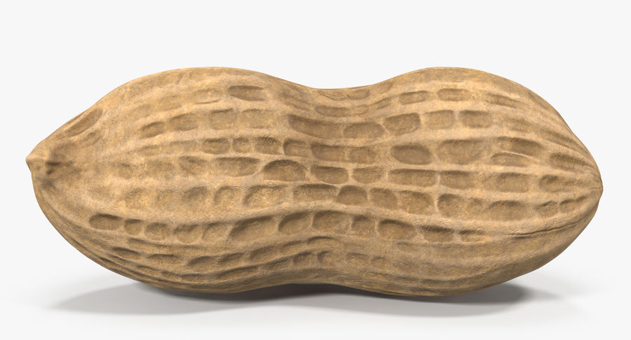 Peanut 1 royalty-free 3d model - Preview no. 13