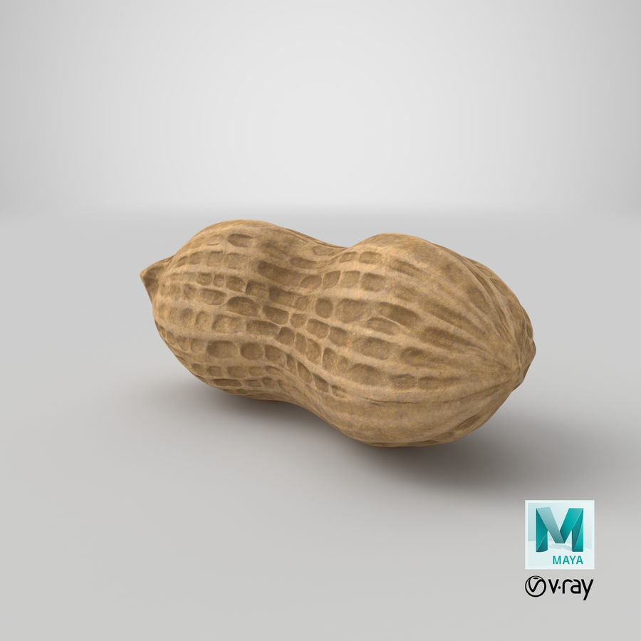 Peanut 1 royalty-free 3d model - Preview no. 36
