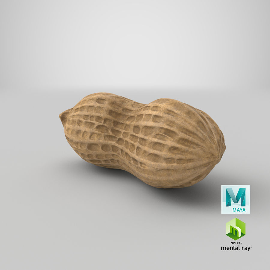 Peanut 1 royalty-free 3d model - Preview no. 37