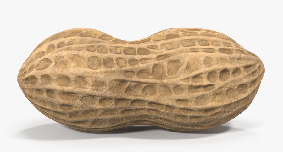 Peanut 1 royalty-free 3d model - Preview no. 15