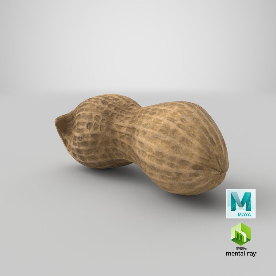 Peanut 2 royalty-free 3d model - Preview no. 37
