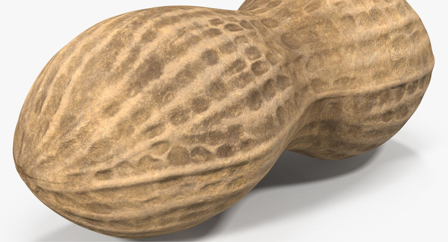 Peanut 2 royalty-free 3d model - Preview no. 9