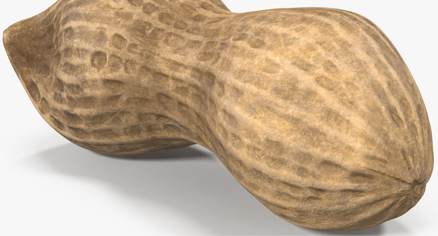 Peanut 2 royalty-free 3d model - Preview no. 10