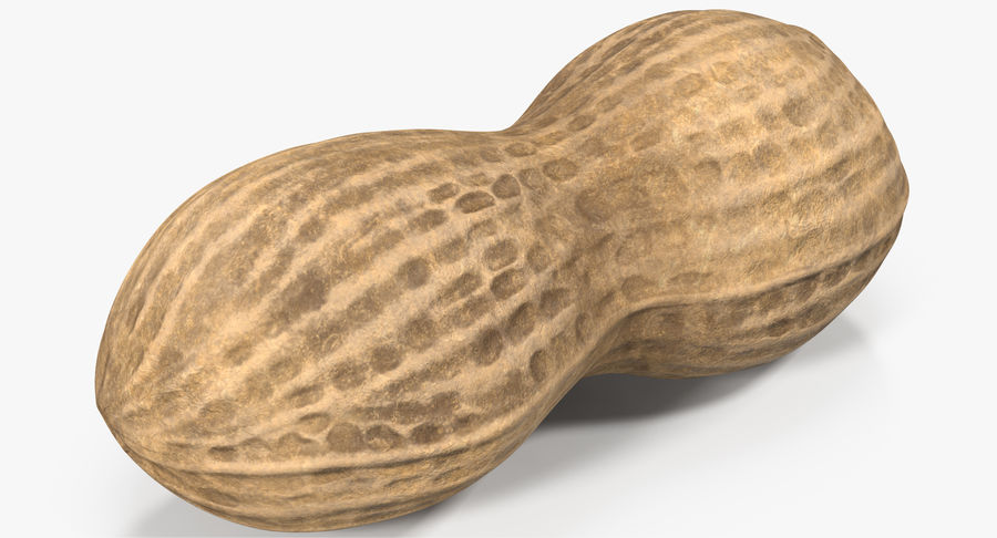 Peanut 2 royalty-free 3d model - Preview no. 5