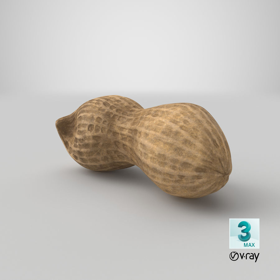 Peanut 2 royalty-free 3d model - Preview no. 38