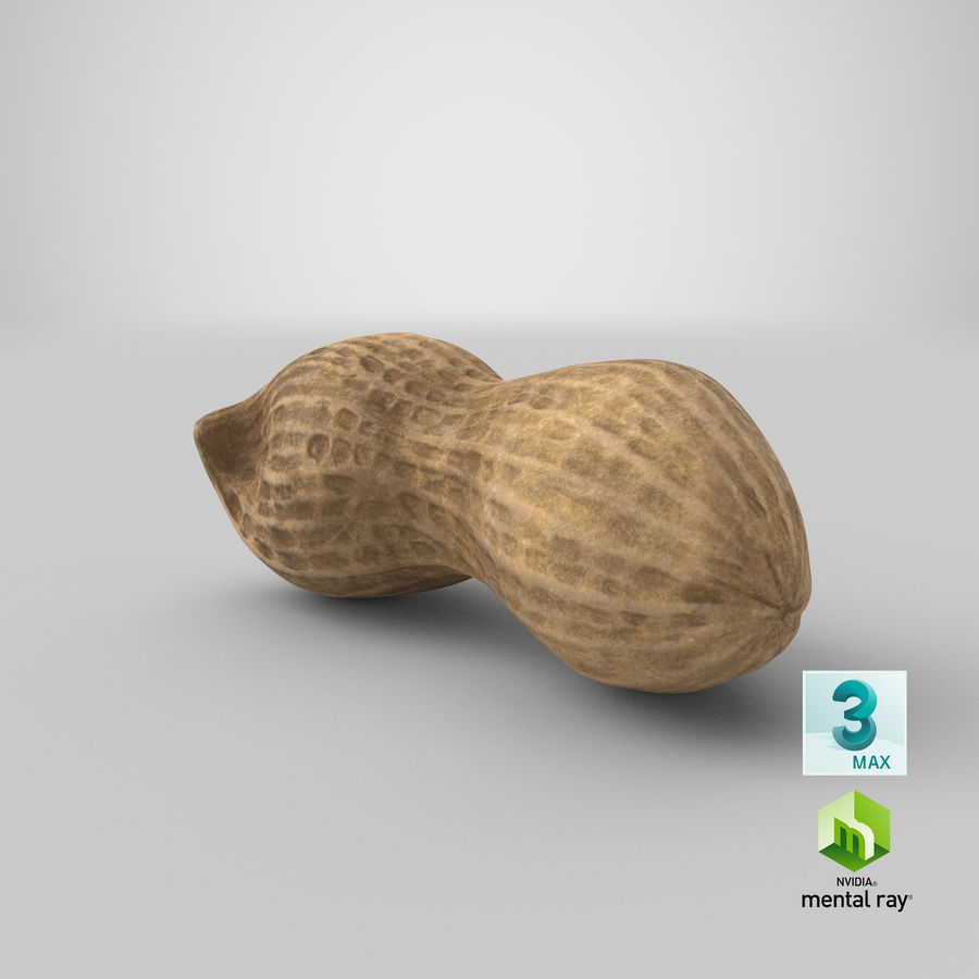 Peanut 2 royalty-free 3d model - Preview no. 39