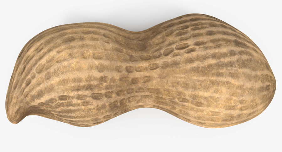Peanut 2 royalty-free 3d model - Preview no. 12
