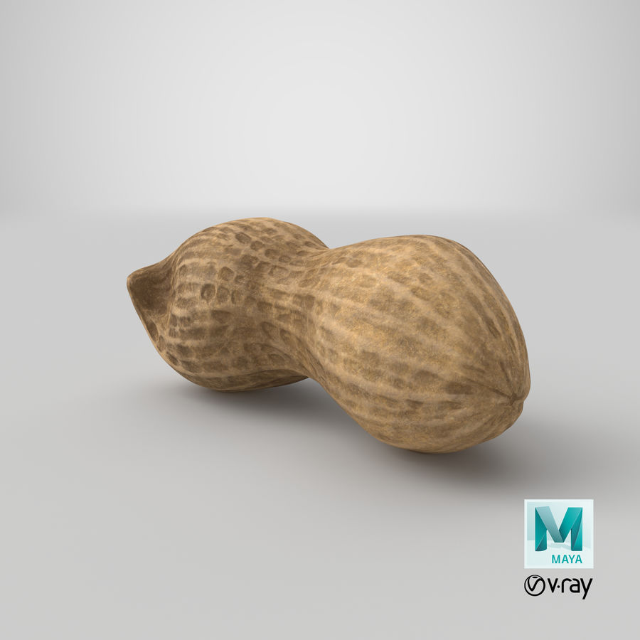 Peanut 2 royalty-free 3d model - Preview no. 36