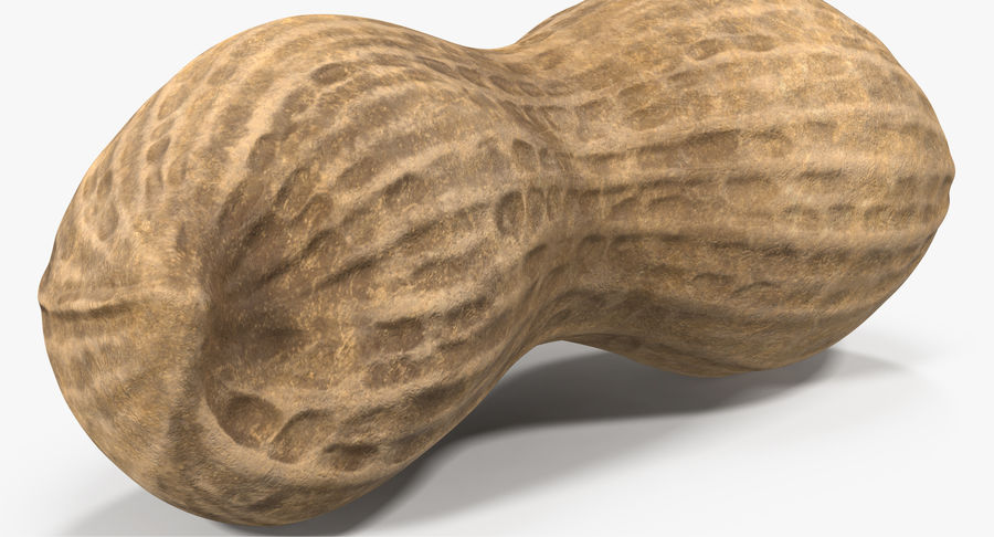 Peanut 2 royalty-free 3d model - Preview no. 7