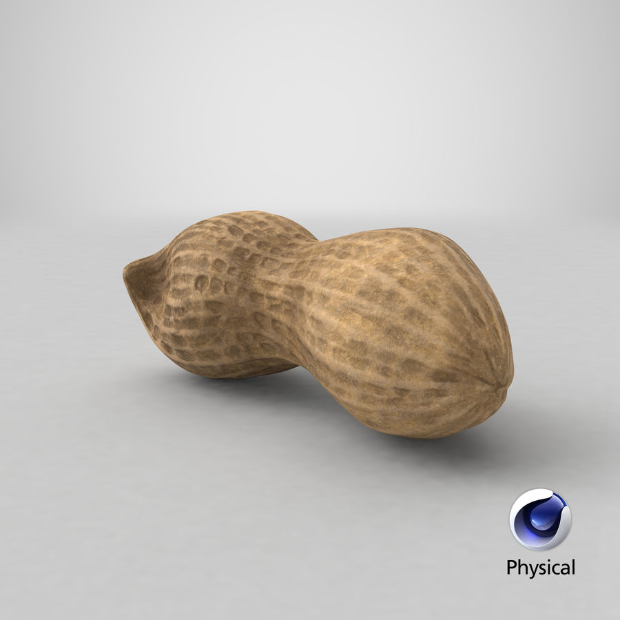 Peanut 2 royalty-free 3d model - Preview no. 40