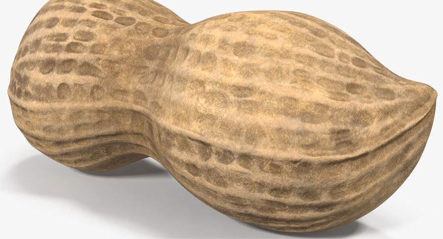 Peanut 2 royalty-free 3d model - Preview no. 8