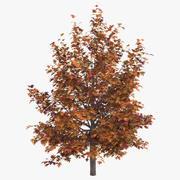 Oak Tree Autumn 3d model