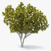 Southern Magnolia Tree 3d model