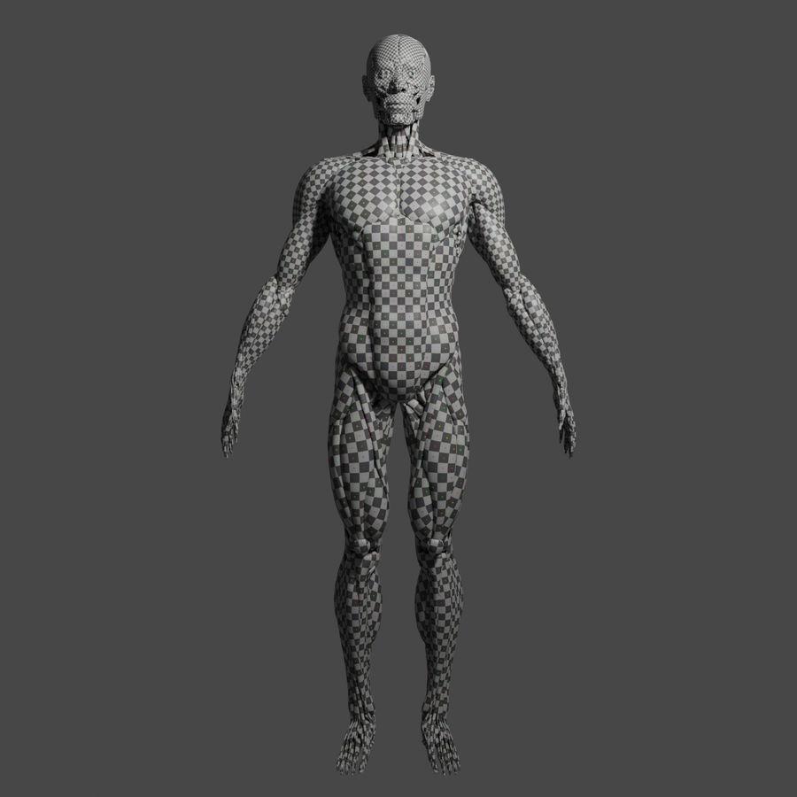 解剖学3 d moedl royalty-free 3d model - Preview no. 13
