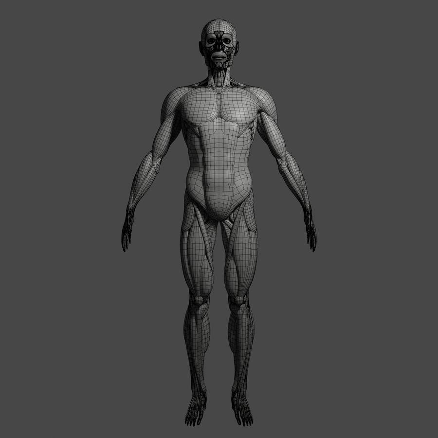 解剖学3 d moedl royalty-free 3d model - Preview no. 15