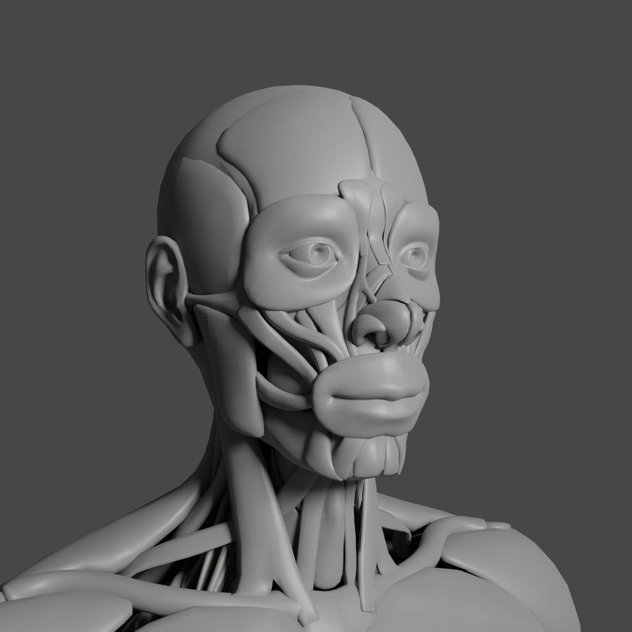 解剖学3 d moedl royalty-free 3d model - Preview no. 2
