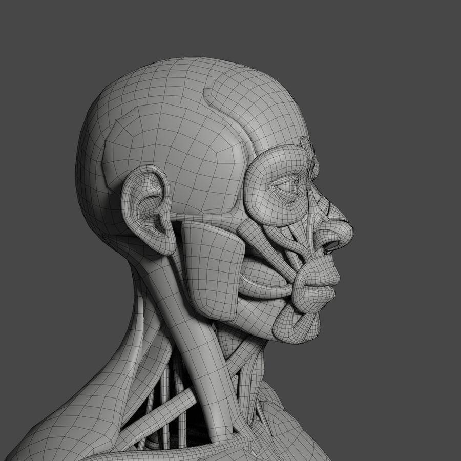 解剖学3 d moedl royalty-free 3d model - Preview no. 8