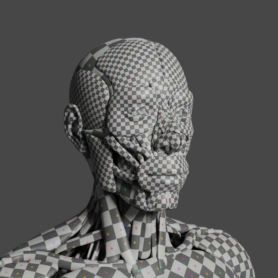 解剖学3 d moedl royalty-free 3d model - Preview no. 3