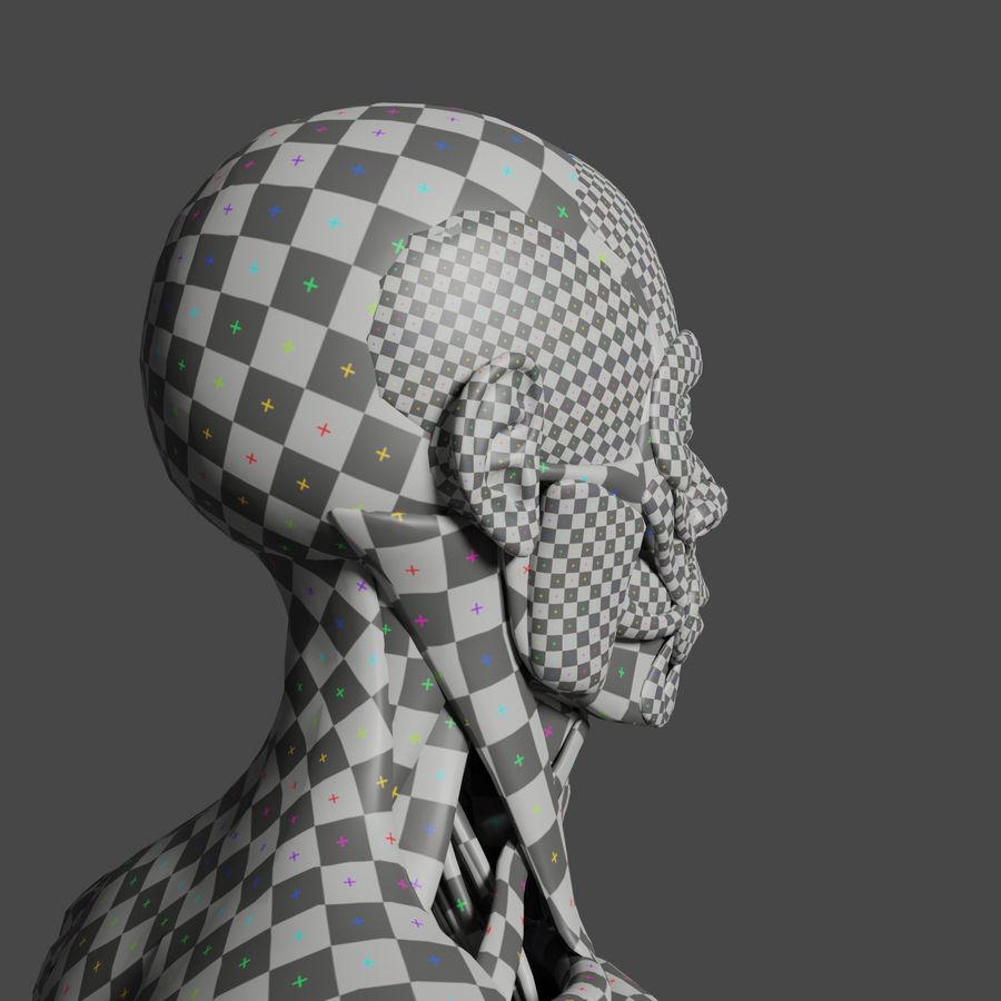 解剖学3 d moedl royalty-free 3d model - Preview no. 9