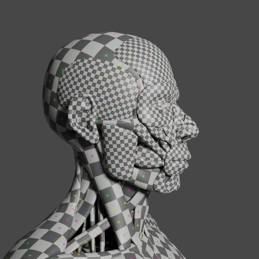 解剖学3 d moedl royalty-free 3d model - Preview no. 6