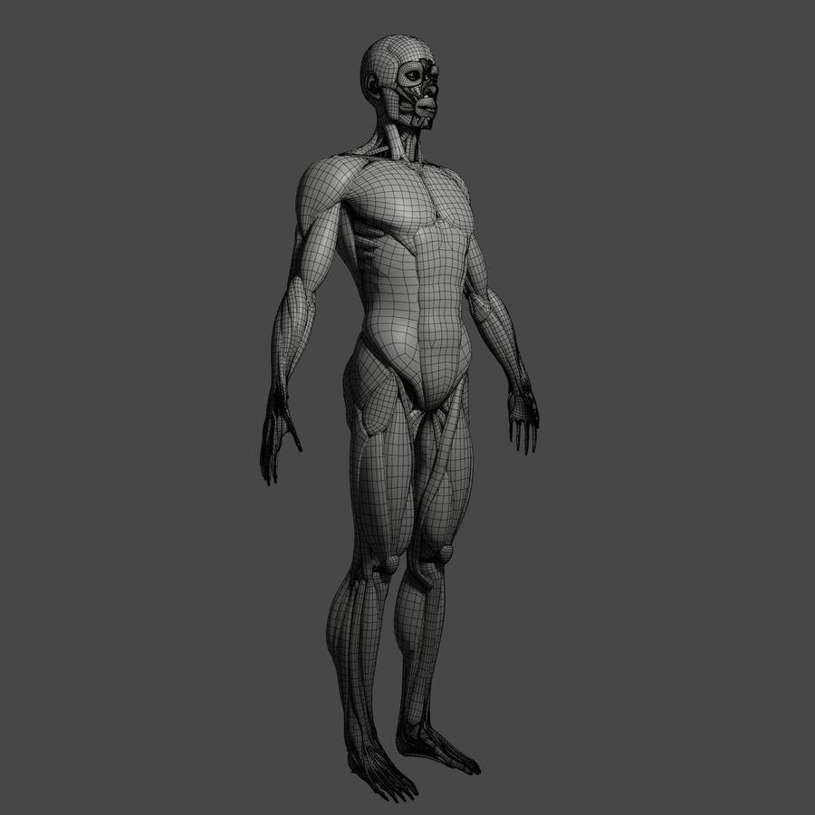 解剖学3 d moedl royalty-free 3d model - Preview no. 16